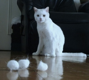 Cat with hairballs (Photo credit Aprille Ross)