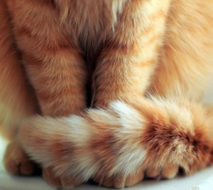 Cat's tail.  (Photo credit http://www.cutestpaw.com)